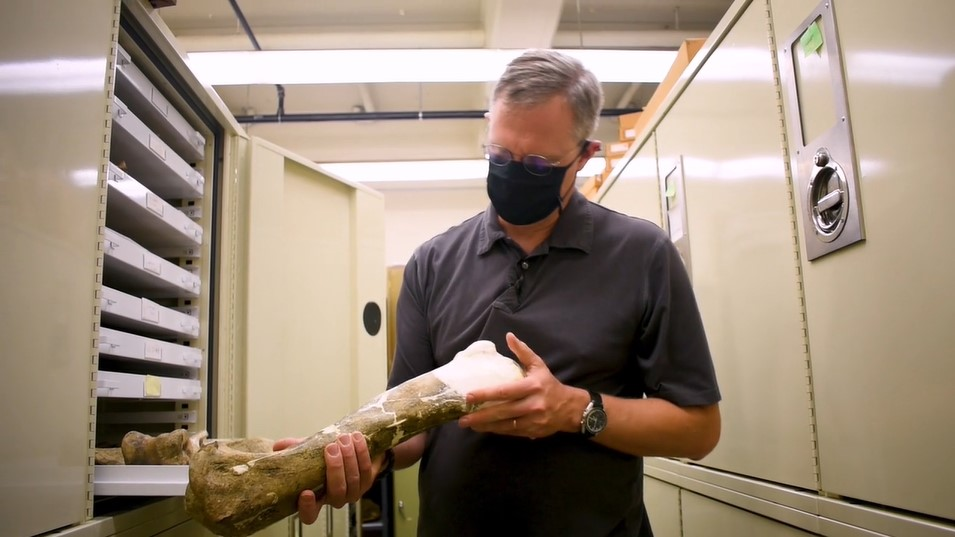 Museum paleontologist in the collections vaults