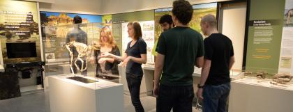 UO students looking at an animal skeleton in the exhibit hall.