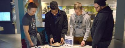 Four UO students exploring the bone identification table in the museum.